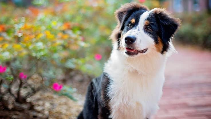 Notre chien, un véritable comprimé du bonheur
