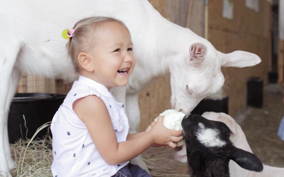 Les chèvres préfèrent les gens heureux!